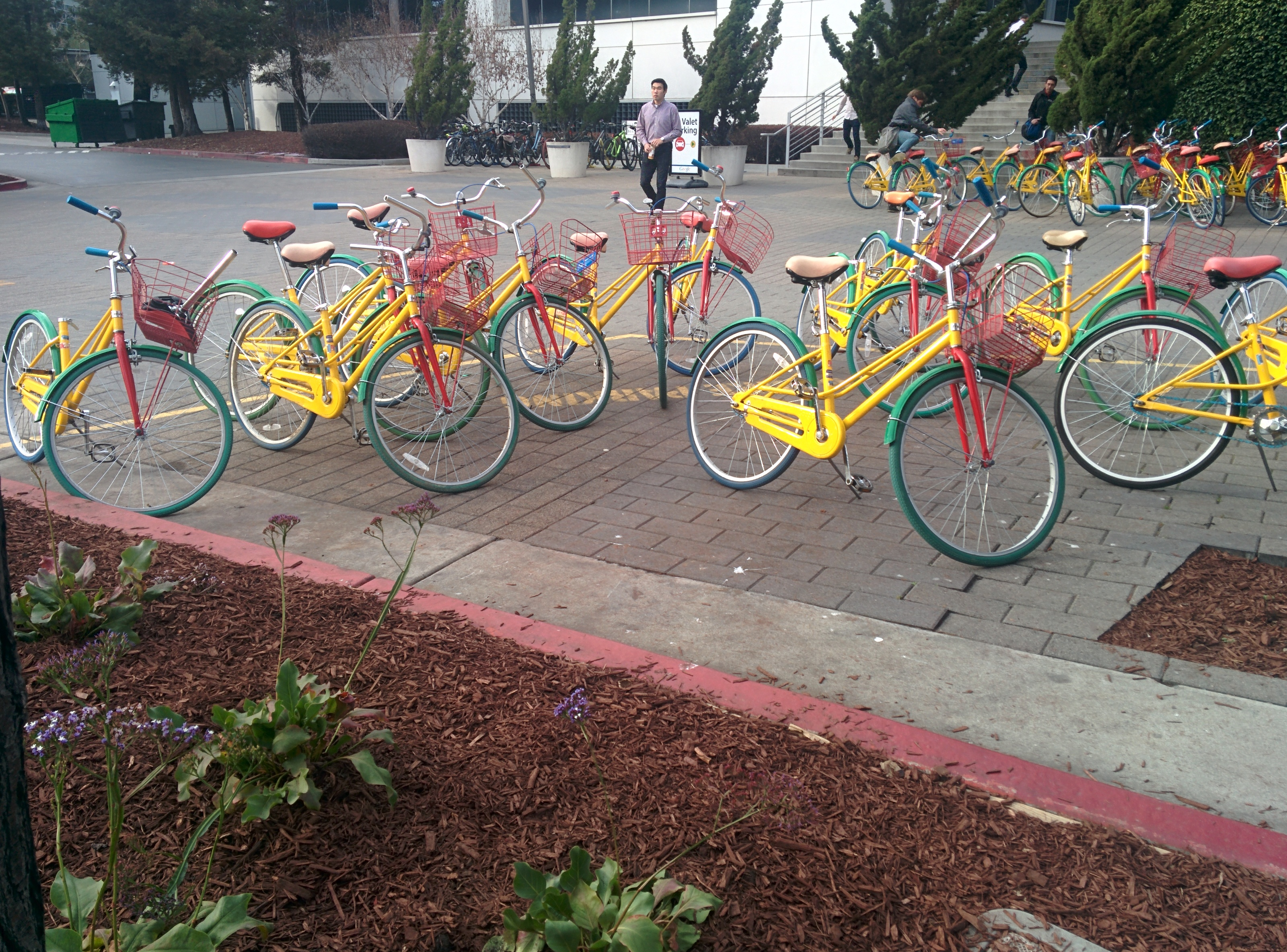 Trip to Palo Alto and vicinity  Part III  Google and